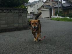 散歩20130730-2