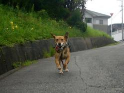 散歩20130730-3