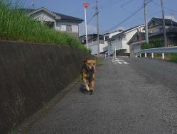 散歩20130731-1
