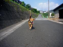 散歩20130731-2