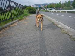 散歩20130823-4
