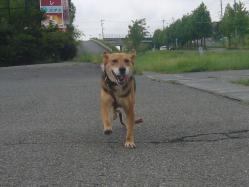 散歩20130826-2