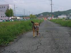 散歩20130826-3