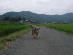 散歩20130826-4