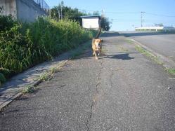 散歩20130827-2