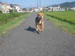 散歩20130827-3