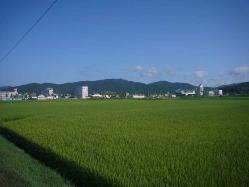 散歩20130827-4