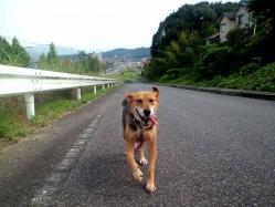散歩20130828-1
