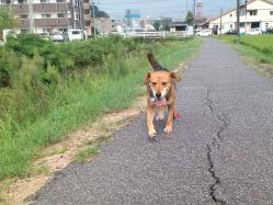 散歩20130828-2