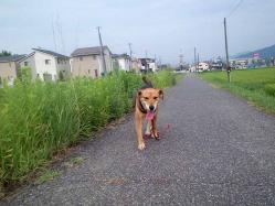 散歩20130828-3