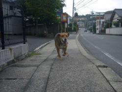 散歩20130829-2