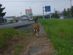 散歩20130829-3