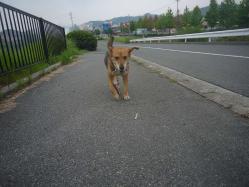 散歩20130829-4
