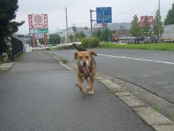散歩20130831-2