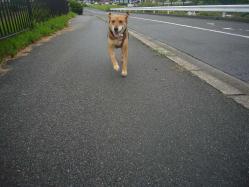 散歩20130831-3