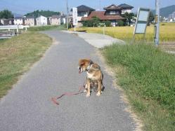 散歩20130921-3