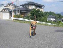 散歩20130922-1