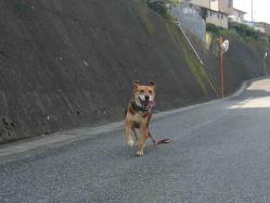 散歩20130922-3