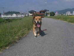 散歩20130922-4