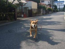 散歩20130923-1
