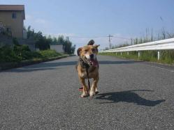 散歩20130923-2