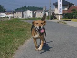 散歩20130924-2