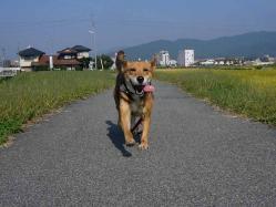 散歩20130924-4