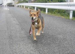 散歩20130925-2
