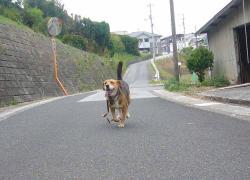 散歩20130925-3