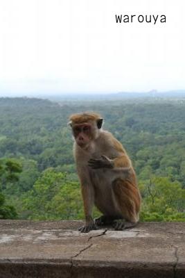 sigiriya monkey
