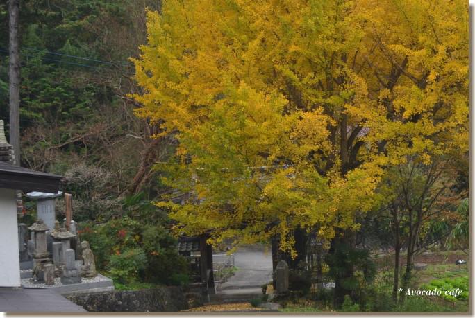 銀杏の木と山門