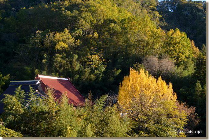 銀杏の木のあるお寺