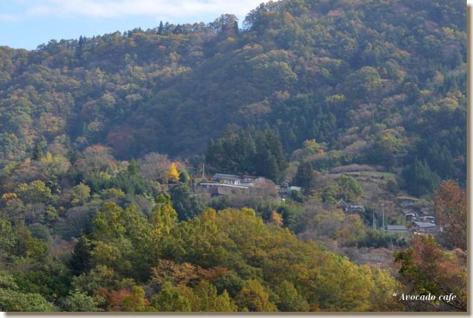 銀杏の木のある家2