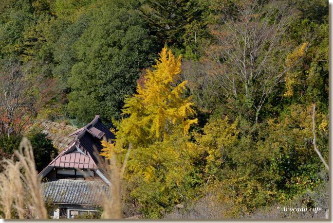 銀杏の木のある家
