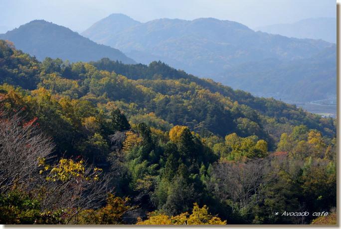 遠景の雑木林