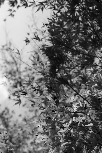 秋深し2013-03e