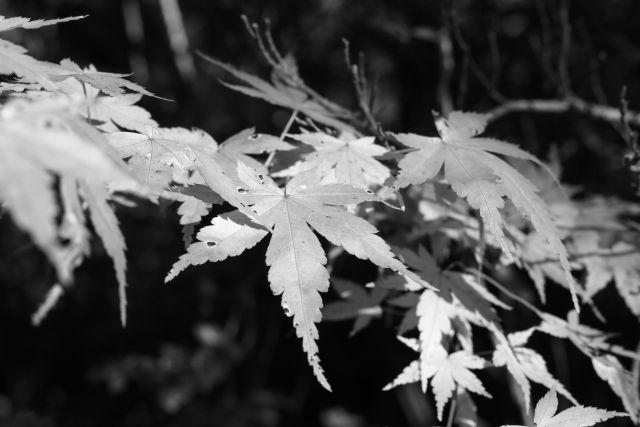 秋深し2013-03b