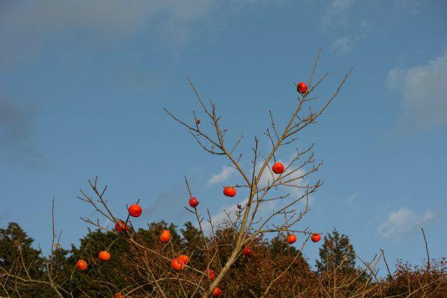 秋深し2013-04a
