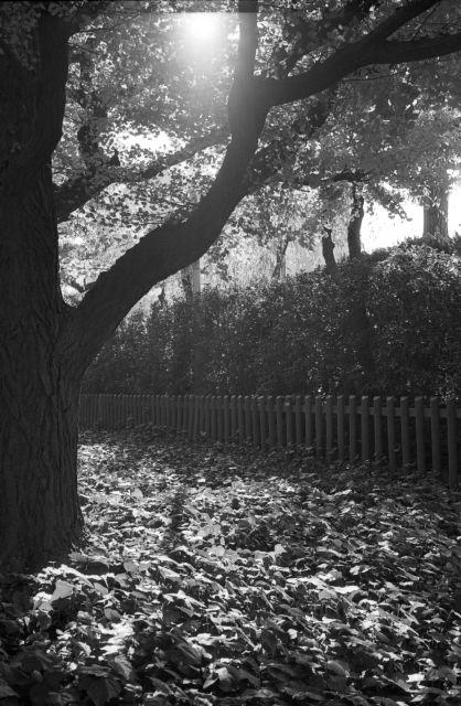 秋深し2013-07d