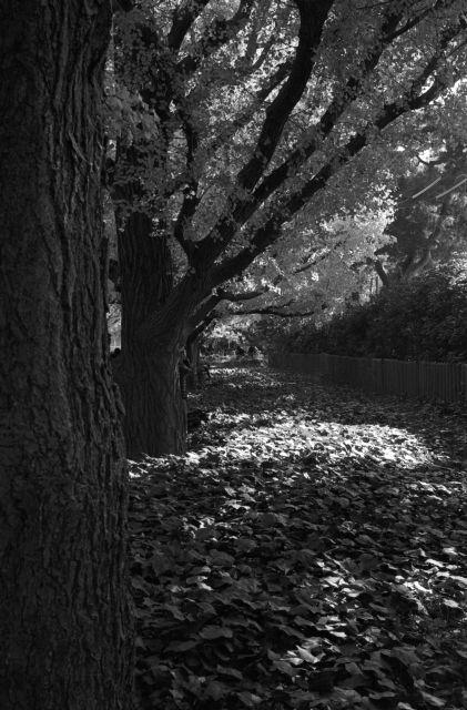 秋深し2013-07