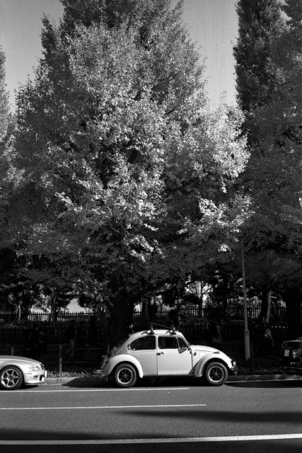 秋深し2013-07a