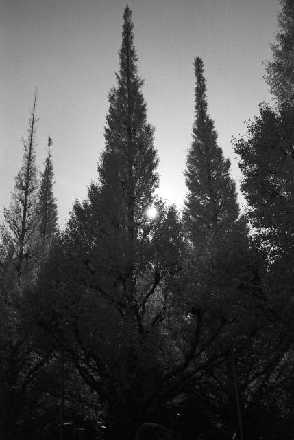 秋深し2013-07c