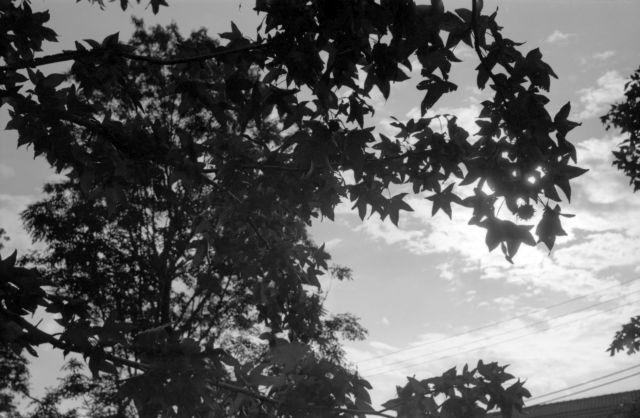 街の秋2014-04a
