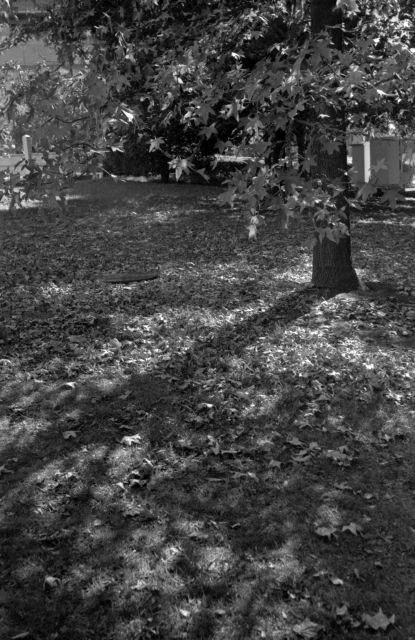 街の秋2014-08a