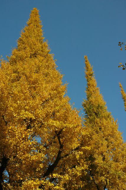 Yellow05b