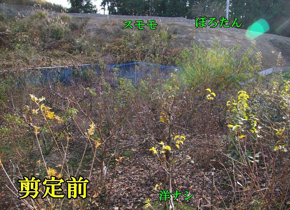 1B_nasi120808.jpg