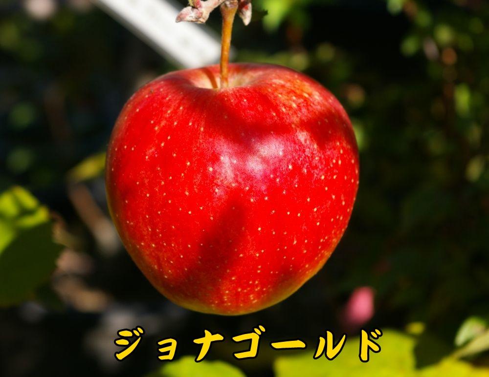 1JG1120c1.jpg