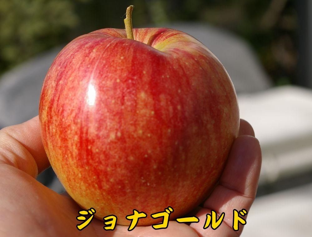 1JG1120c2.jpg