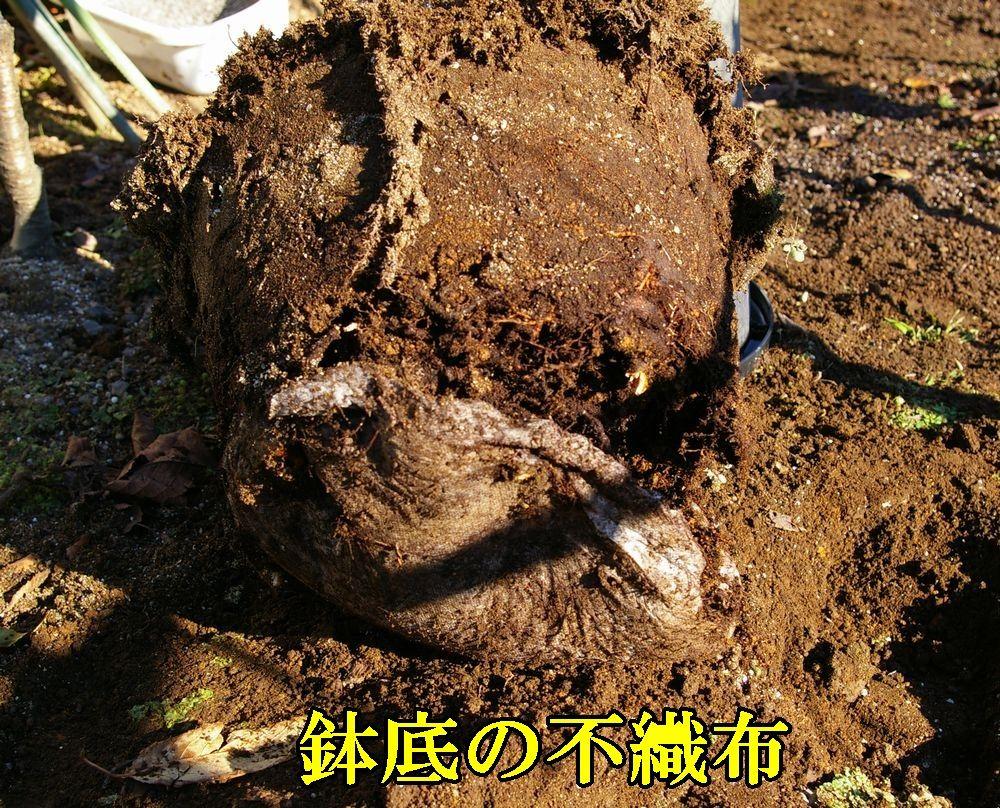 1fusyokufu1214c1.jpg