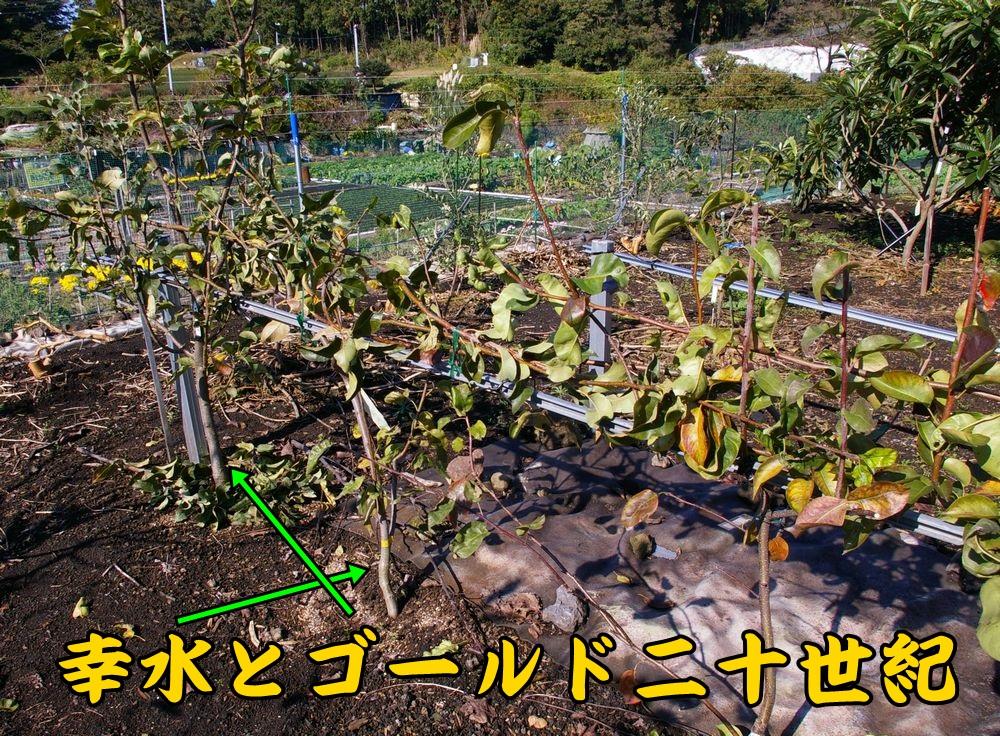 1kos_seiki1116c1.jpg
